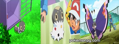 ¡A la caza del comprador Pokémon! ¡¡La estrategia de camuflaje de Spewpa!!