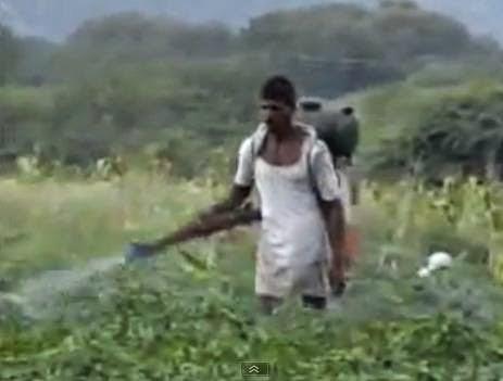 kenapa-cotton-katun-berbahaya