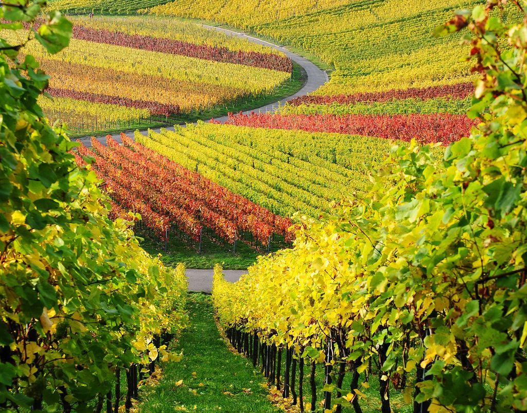 9. Vineyard