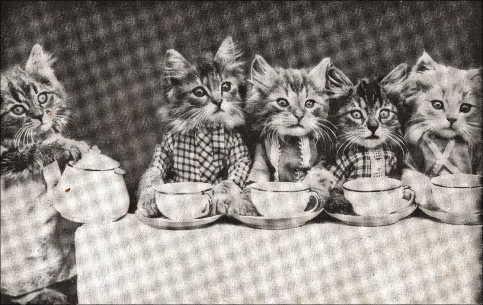 Vintage kittens having tea