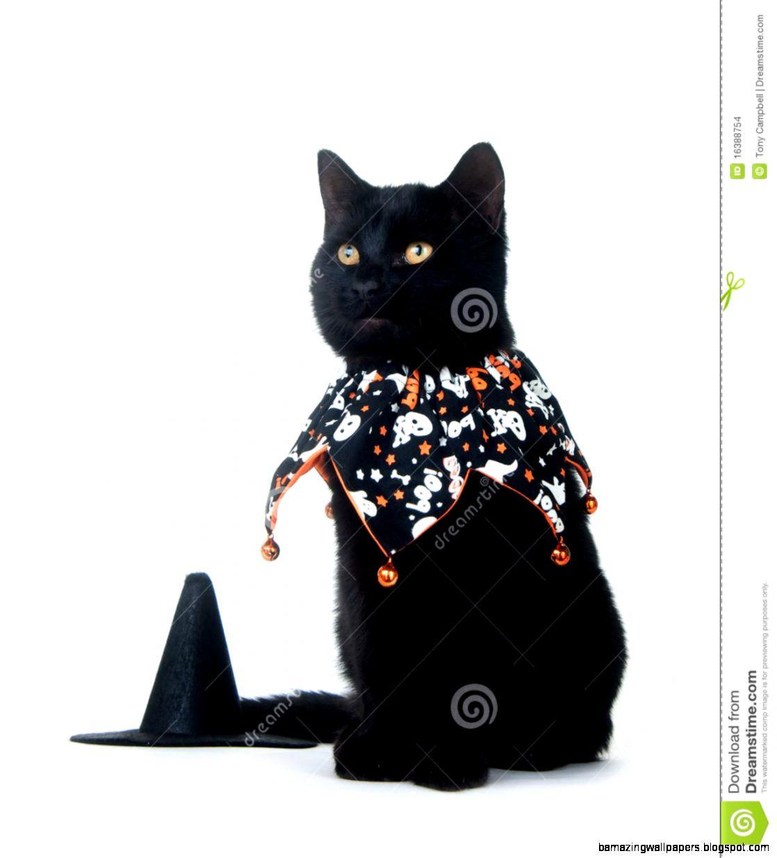 Cute Black Cat In Halloween Bib Stock Images   Image 16388754