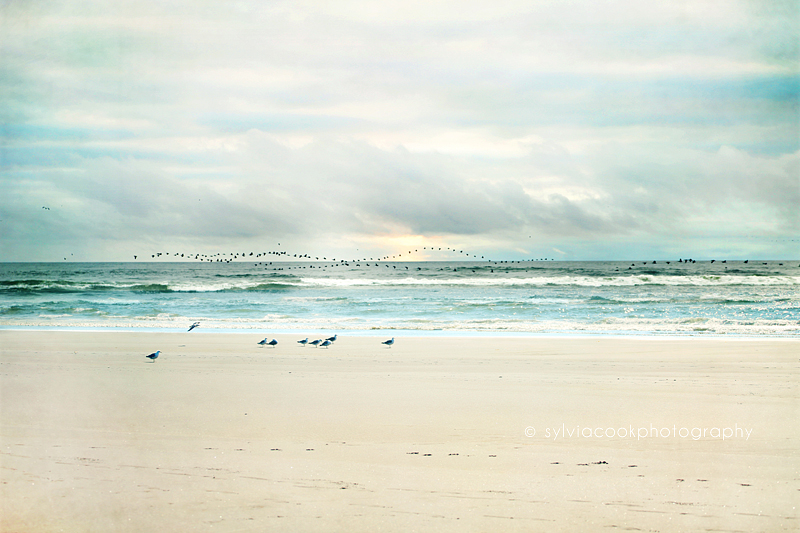 ocean, beach photograph, seagulls