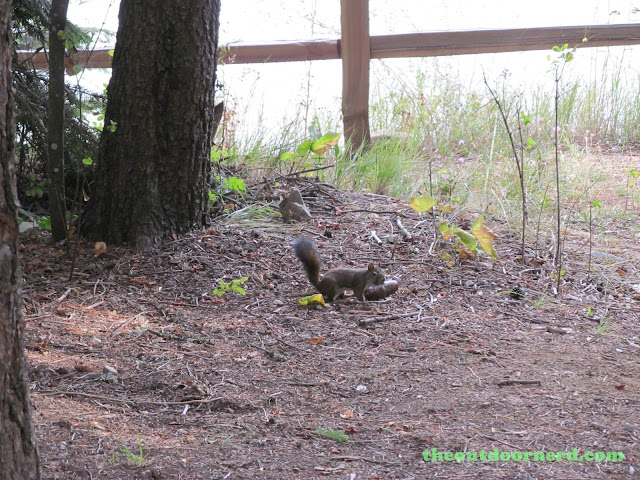 Outlet Campgrounds At Priest Lake, Idaho: Squirrel!