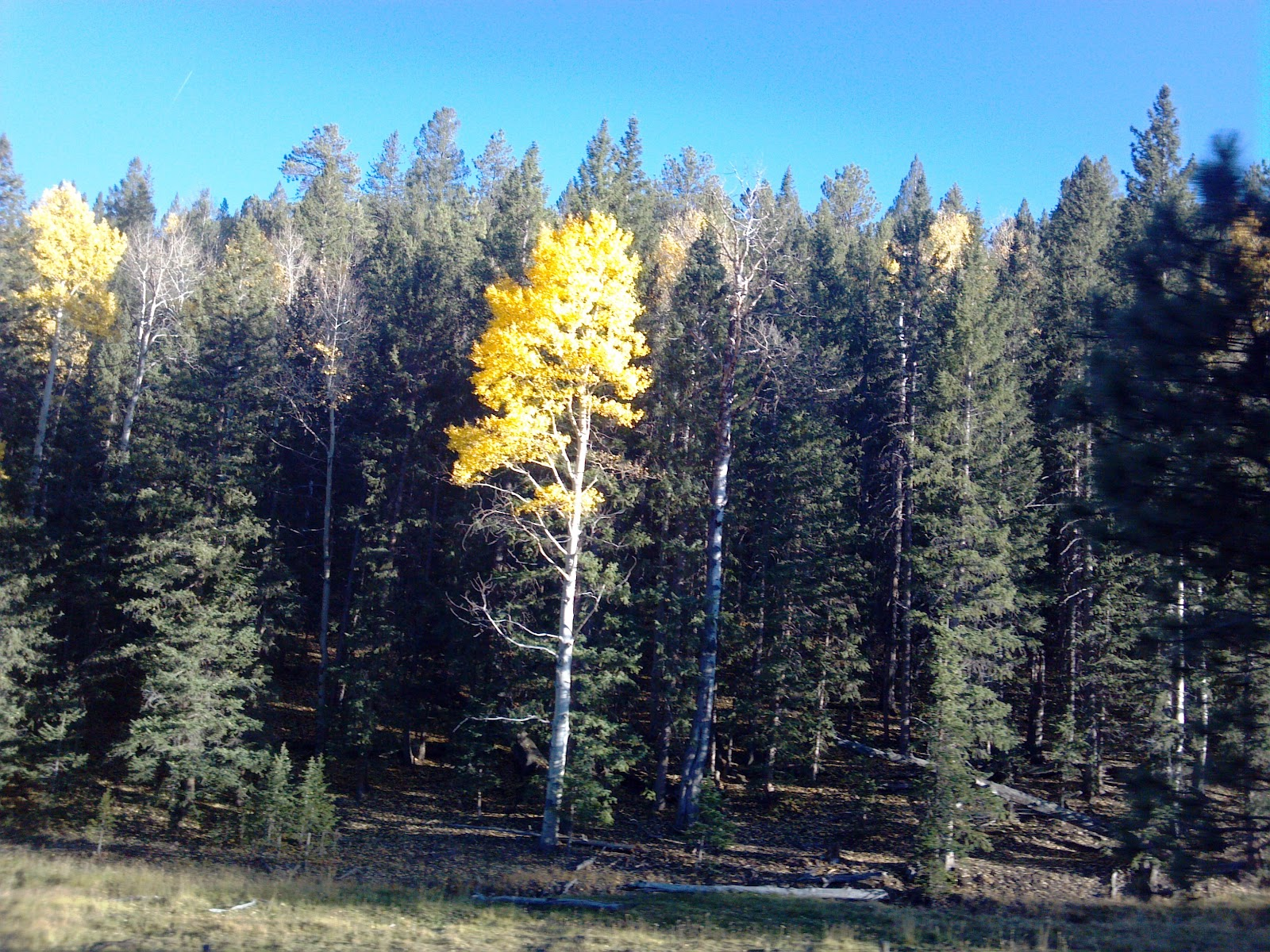 San Isabel Fall 2012 Photo Tour Aspen Colorado City