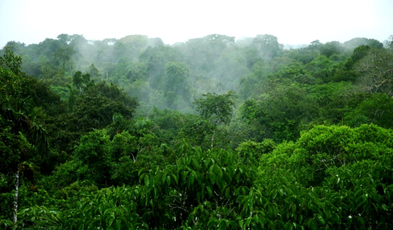 What is the average rainfall in the Amazon rainforest