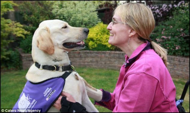 Labrador Byron ajuda a dona em cadeiras de rodas nas tarefas do seu dia a dia