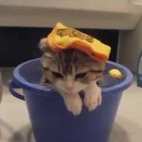 gatos e a água
