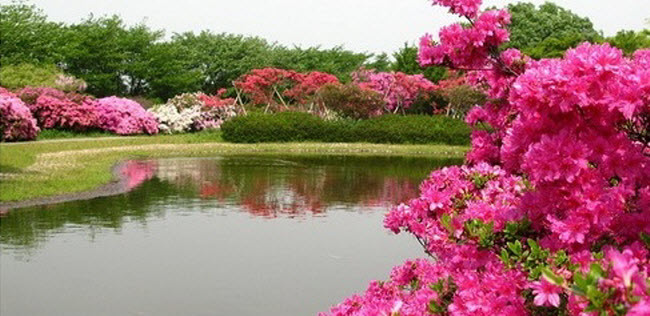 شلالات الزهور اليابانية Water_Fall_Flowers_Japan_16.jpg