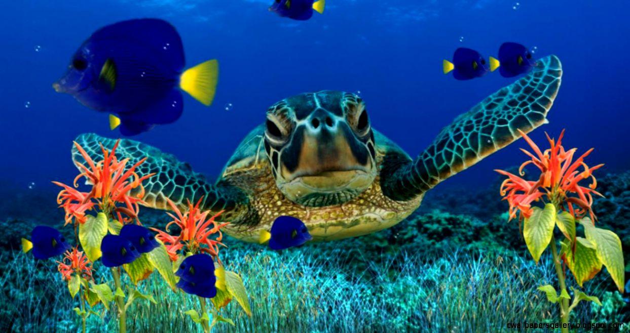 Most Colorful C Reef  Underwater world  Pinterest  C