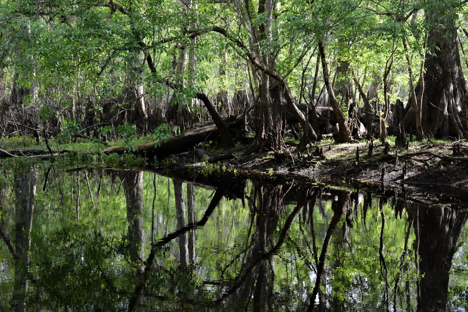 How to write an essay about swamps