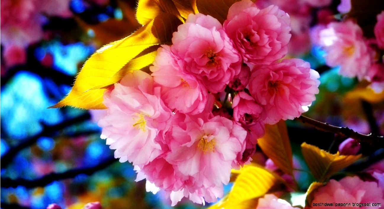 Beautiful Flower Hd Wallpapers Free Download Best Hd Wallpapers