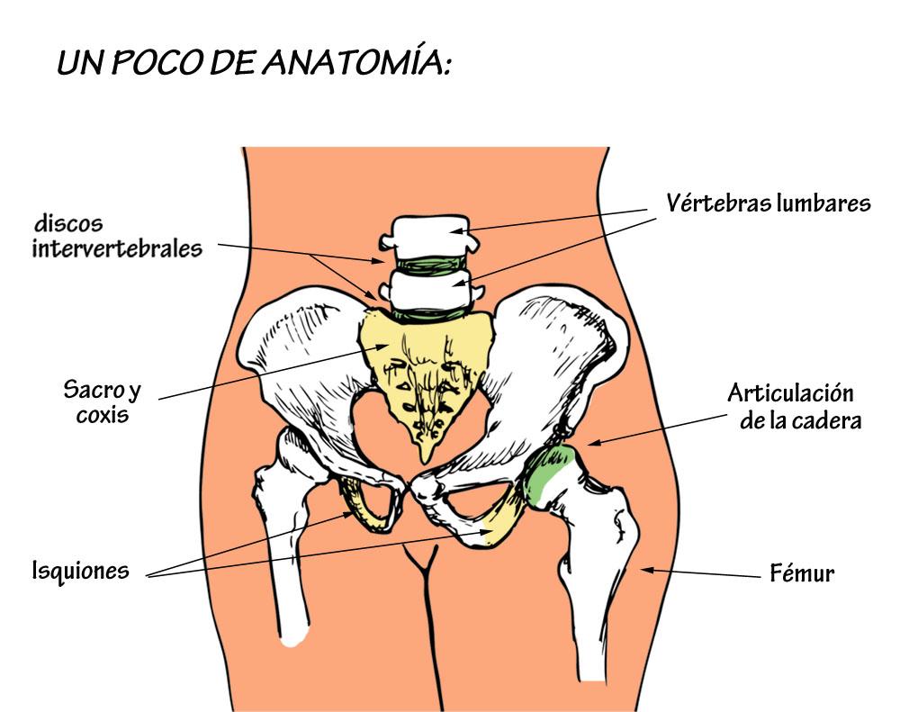 El centro del tratamiento de la columna vertebral y las articulaciones el atlante el más