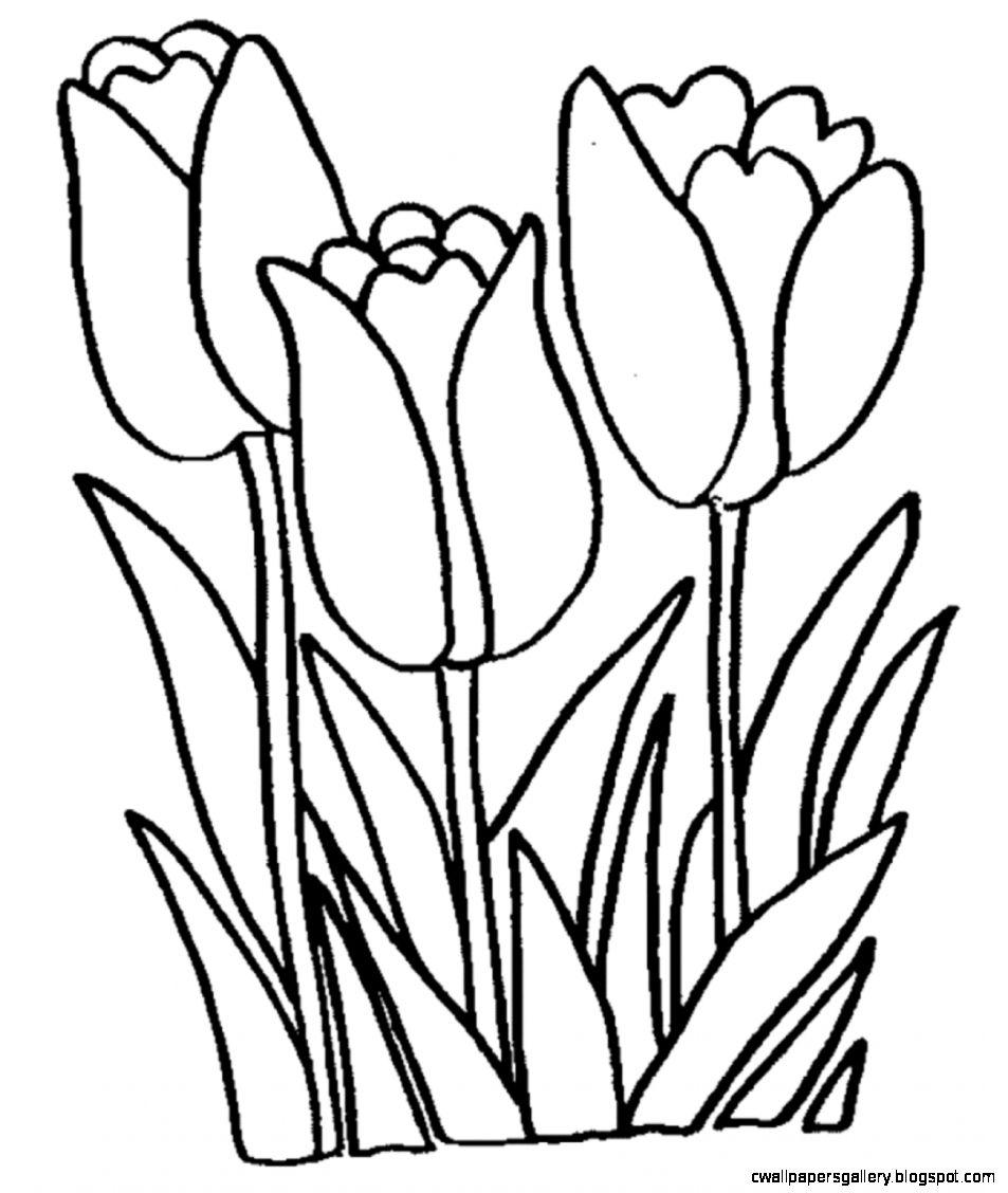 Tulip Clip Art   Images Illustrations Photos