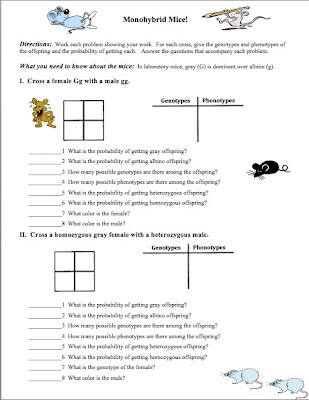 lab 3 punnett squares worksheet answer. Black Bedroom Furniture Sets. Home Design Ideas