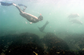 snorkel with sea lions Patagonia Argentina