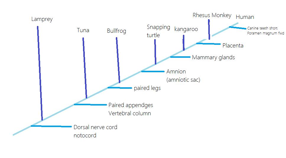 Kangaroo Cladogram Worksheet kangaroo cladogram worksheet with – Cladogram Worksheet Answers