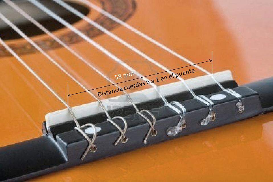 Cithara hispanica : Cuerdas