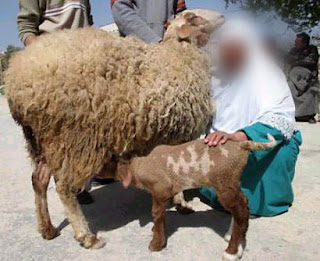 Allah's name appears as a birthmark on a lamb born in Palestine1