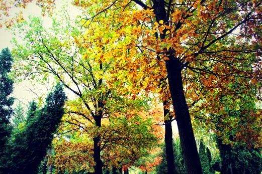 otoño en polonia