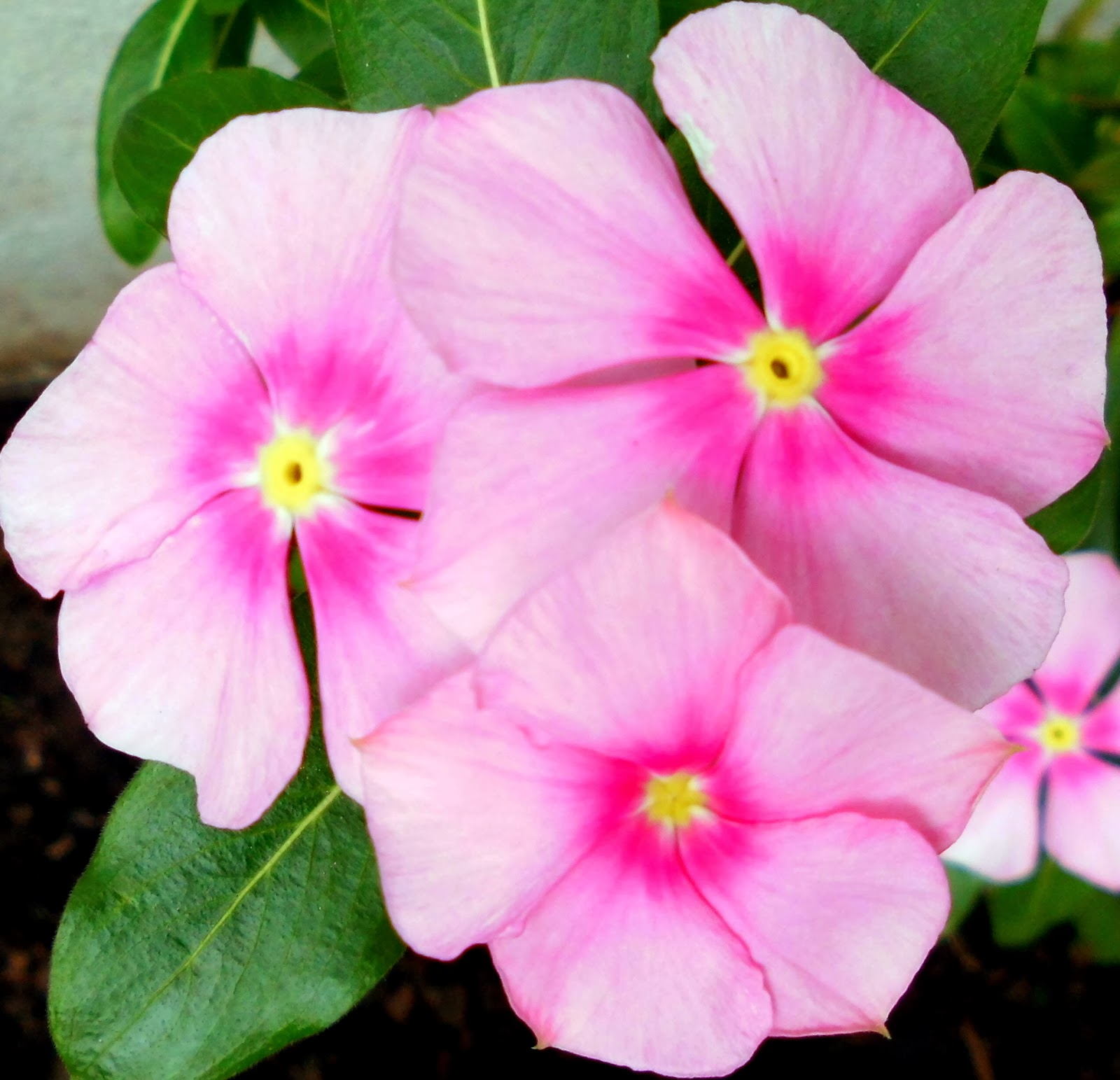 Soluciones para el hogar y el amor nuevas floraciones for Plantas para pleno sol