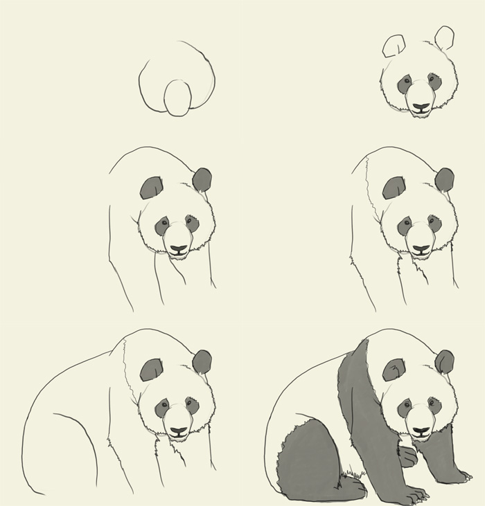 panda drawing step by step - photo #1
