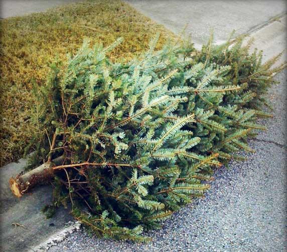 oh christmas tree dead christmas tree