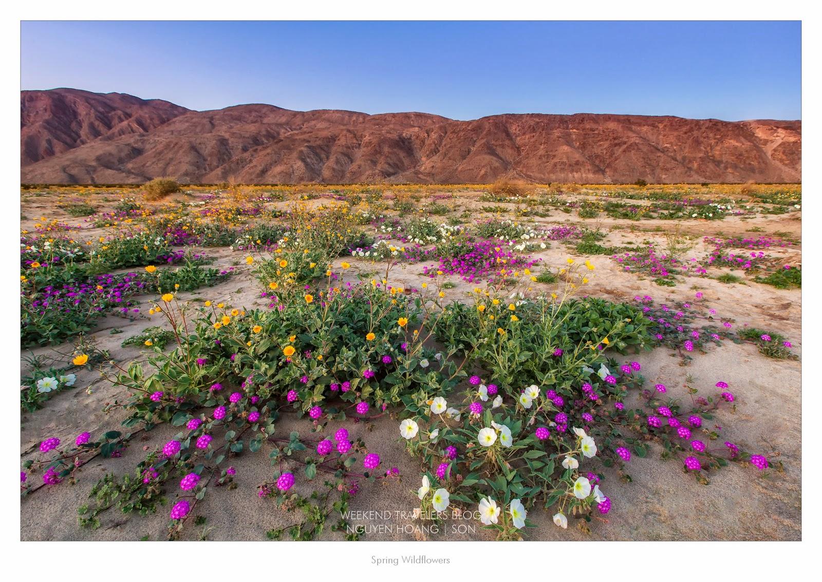 San Diego Wildflowers