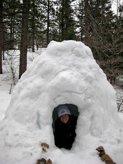 Igloo in forest
