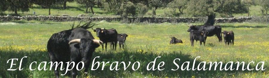 El campo bravo de Salamanca