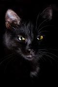 Black Cat train heartnet