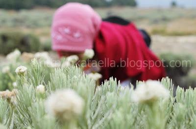 Kataella.blogspot.com, emak-emak blogger, dunia menulis, emak-emak, cerita sahabat sejati, sahabat baik, sahabat selamanya, sahabat yang pengertian, sahabat
