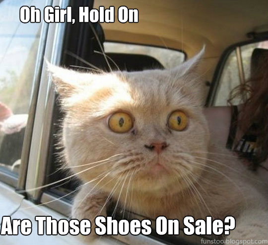 Funny Cat - Oh Girl, Hold On - Are Those Shoes On Sale