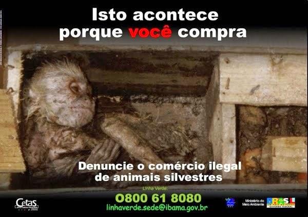 NÃO COMPRE ANIMAIS SILVESTRES! DENUNCIE! SALVE VIDAS!