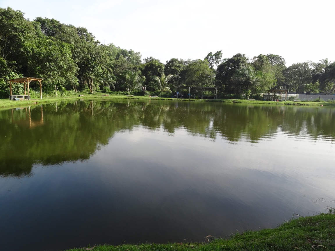 Fishing spots in kuala lumpur selangor tanjung event for Fishing pond