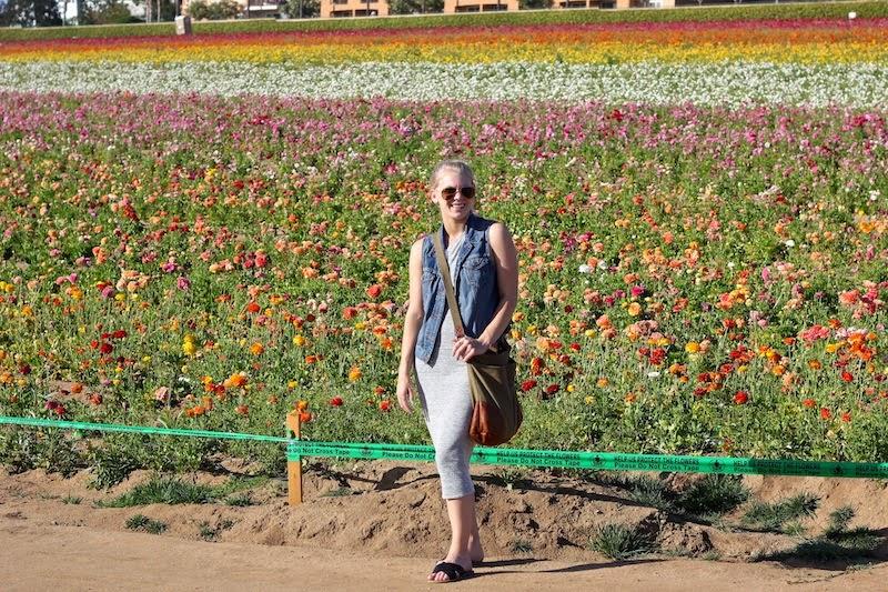 Shae Roderick Flower Fields