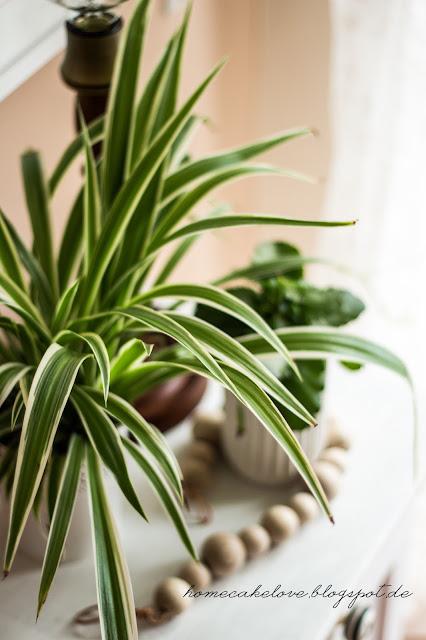 urban jungle, zimmerpflanzen, wohnen mit pflanzen, dekorieren mit pflanzen