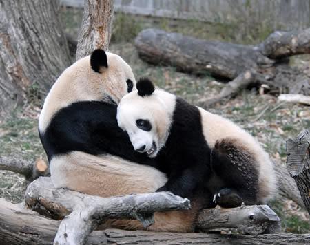 imágenes de osos bonitos