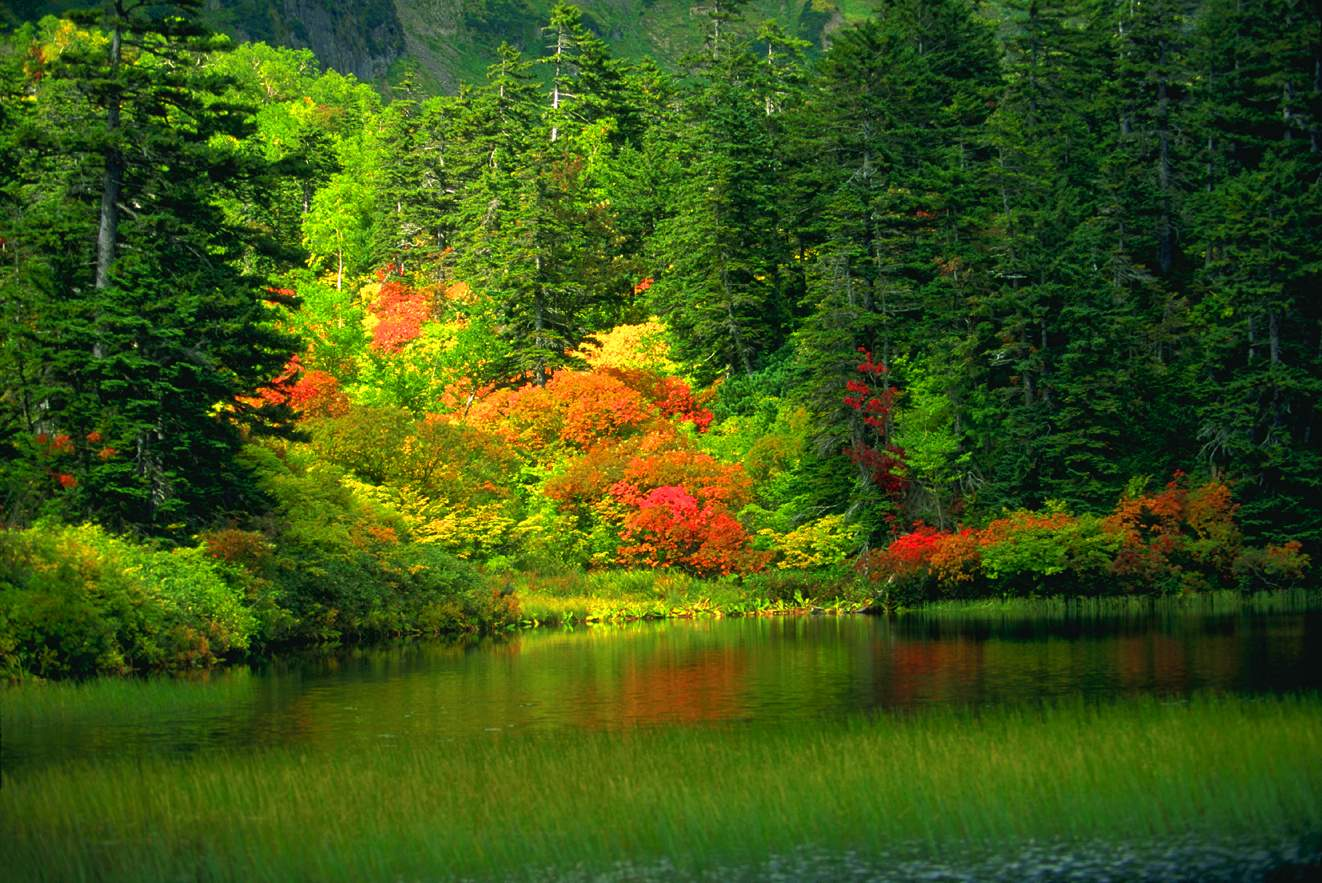 Colorful forest with outstanding lake infront