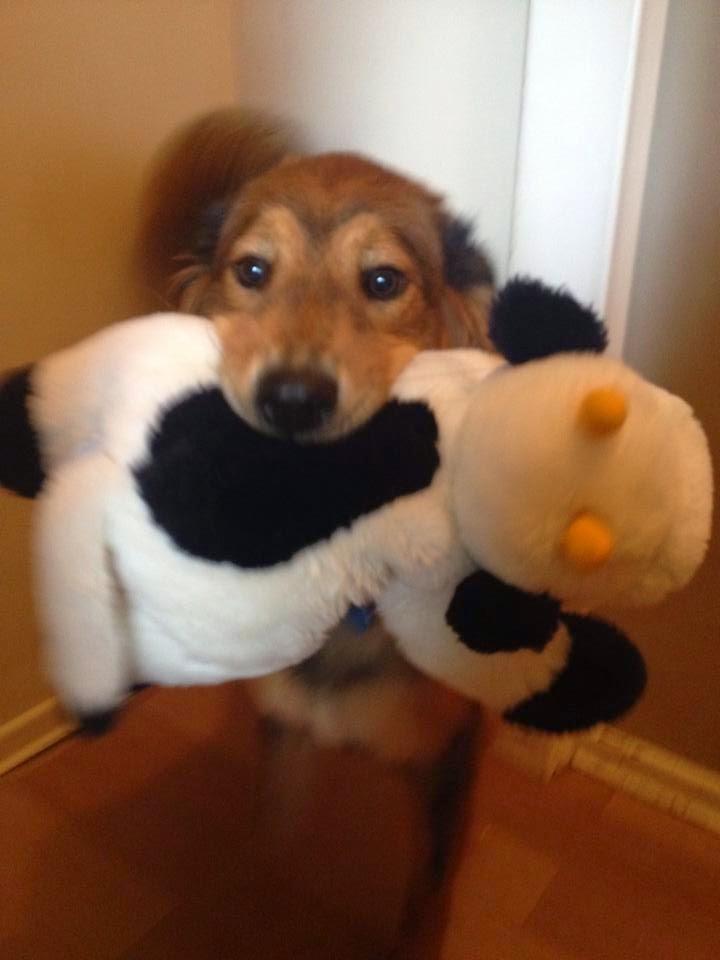 Sansa, the pet dog