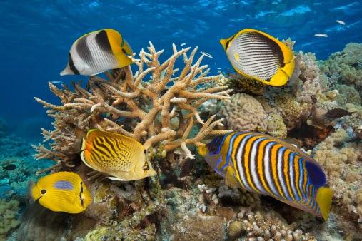 Aqua Goa Mega Fish Festival to Start from January 29