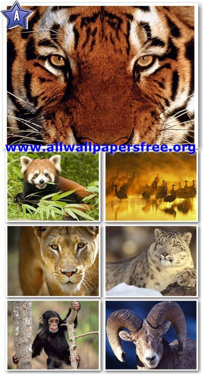 60 Amazing Animals Wallpapers 1280 X 1024 [Set 34]
