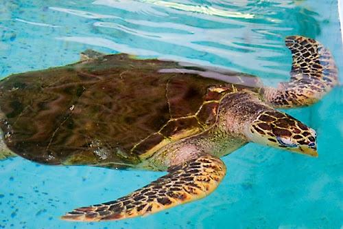 Turtle Museum Mazunte Mazunte Turtle Rescue Project