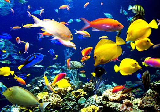 Sáng kiến kinh nghiệm mầm non giúp trẻ yêu biển đảo