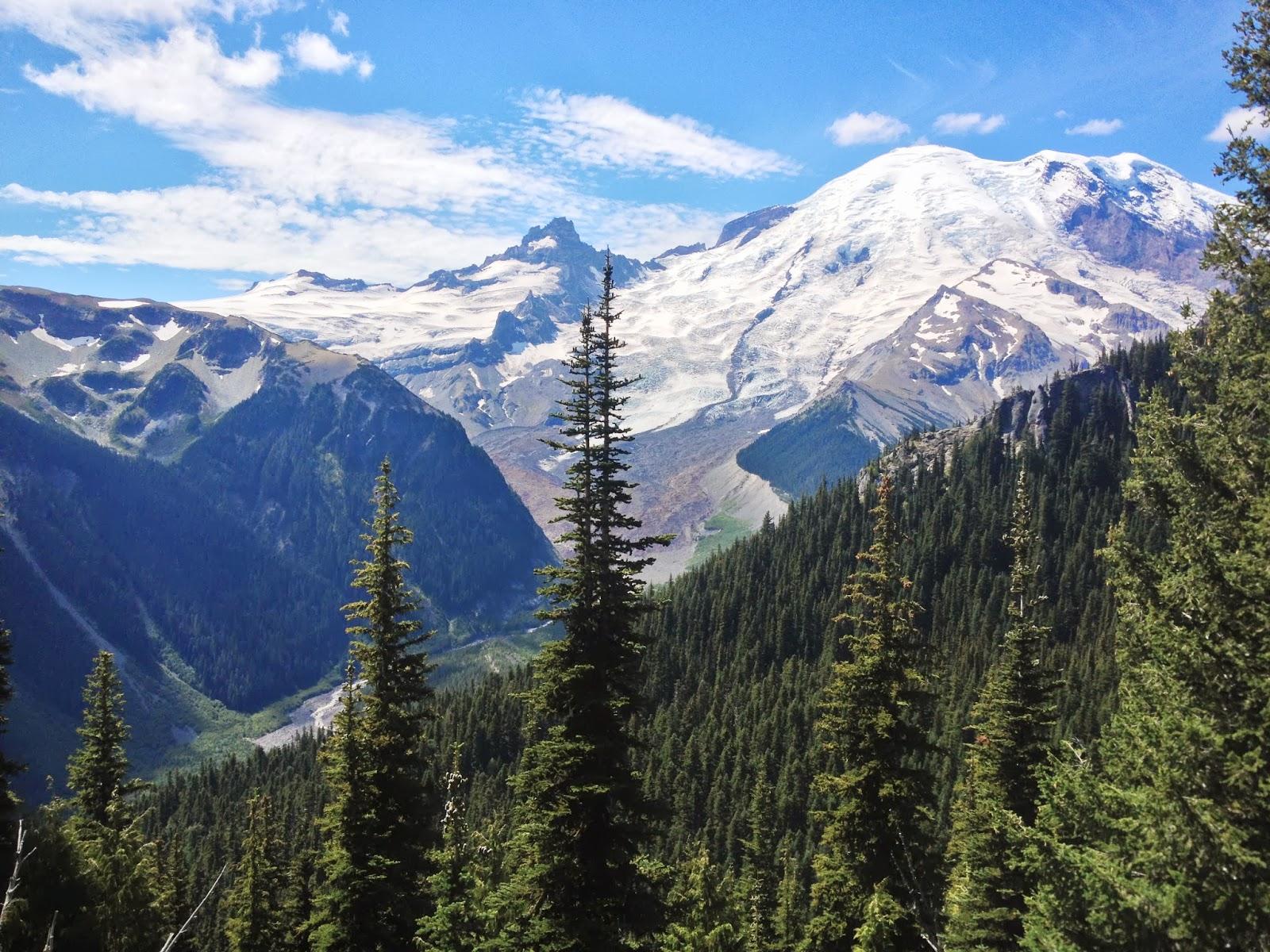 Growing Steady: Mt. Rainier National Park