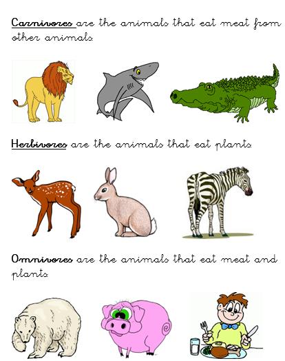 Carnivorous animals list