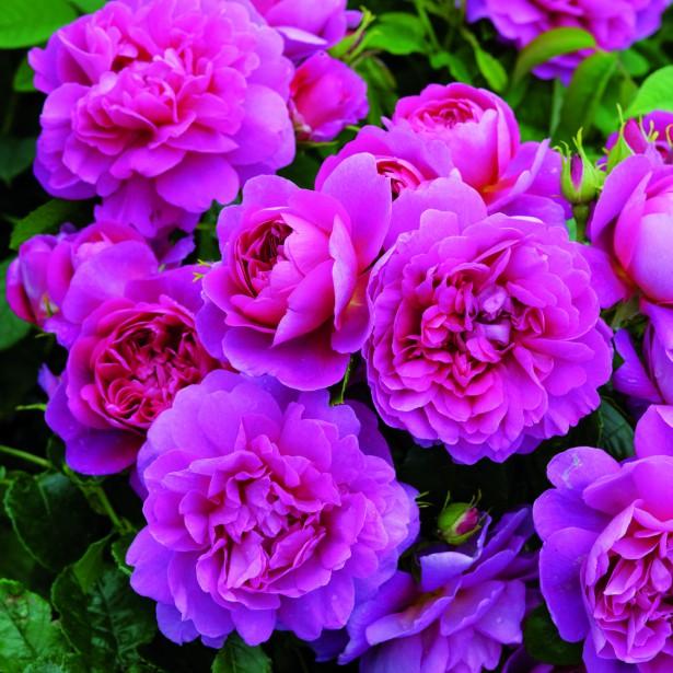 Mon petit jardin en sologne commande promesse de fleurs for Promesse de fleurs