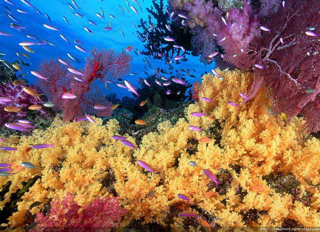 pemandangan bawah laut wallpaper