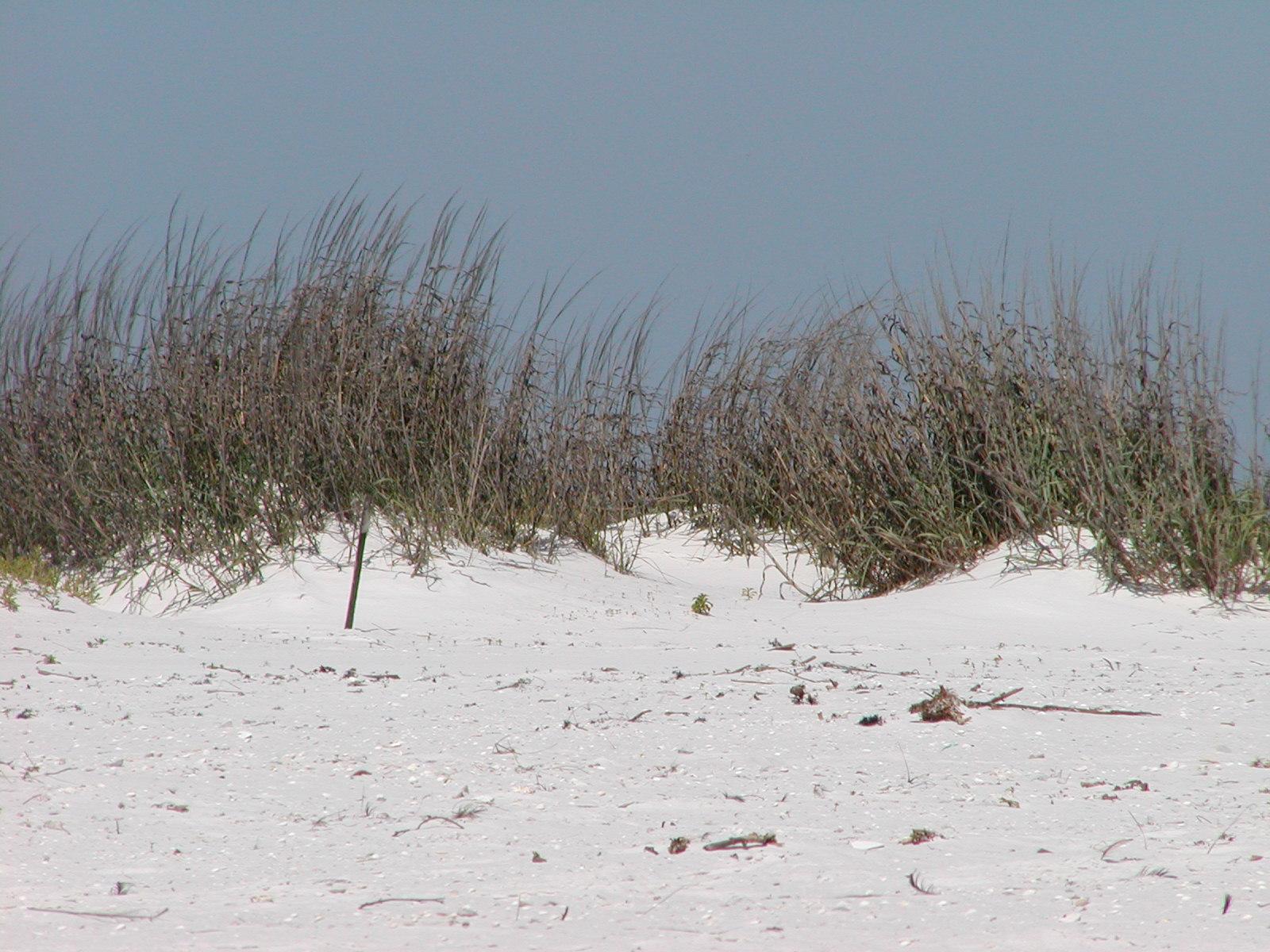 Peggys Pensacola Dream Beautiful Pensacola Beach Weather