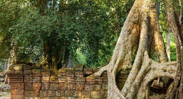 Kisah 1001 Malam Tentang Hikayat Batu Dan Pohon Ara