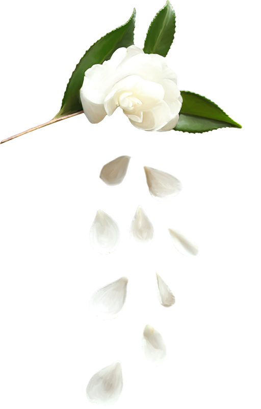 Forgetmenot white flower petals white flower petals mightylinksfo